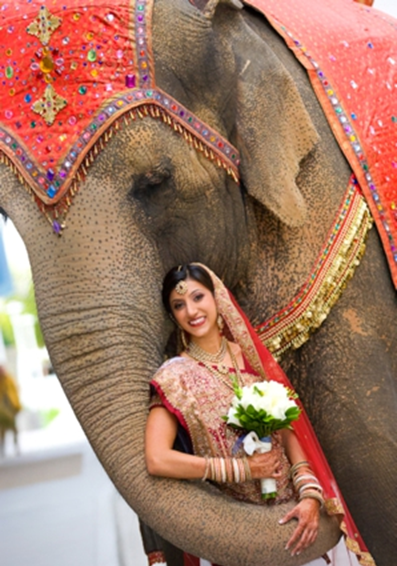 How To Have An Elephant Themed Wedding Sonal J Shah Event Consultants Llc Wedding invitation indian elephant elephantidae convite, wedding, mammal, holidays, wedding png. how to have an elephant themed wedding